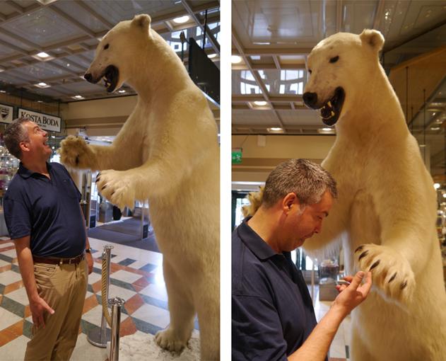 Eisbär-