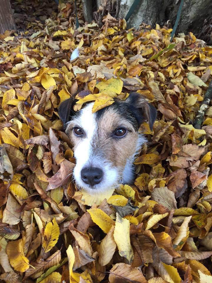 kikis-terrier