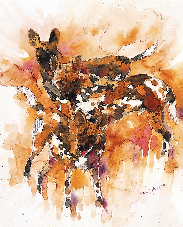 Afrikanische Wildhunde Grafik