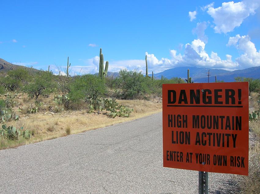 Saguaro_National_Park1