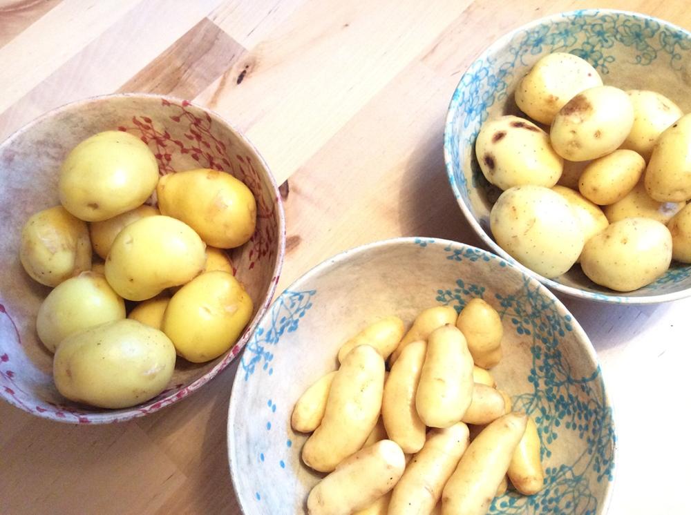 Kartoffeln 012