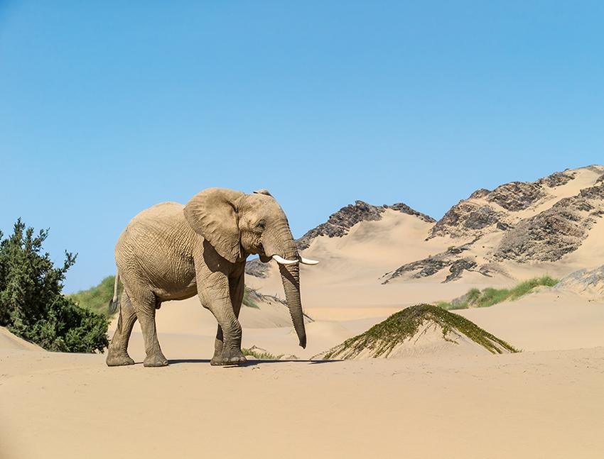 Namibia_06